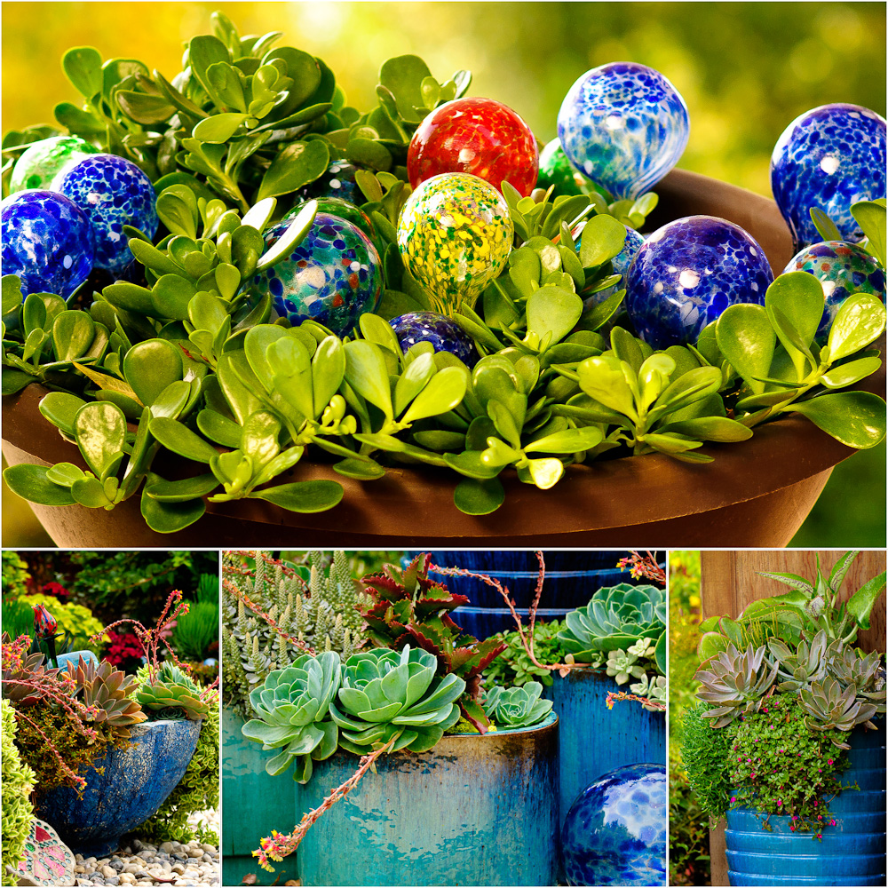 Patti Brisebois' Manitoba zone 3 garden. To add punches of colour to her garden, Patti has numerous plantings in blue containers.