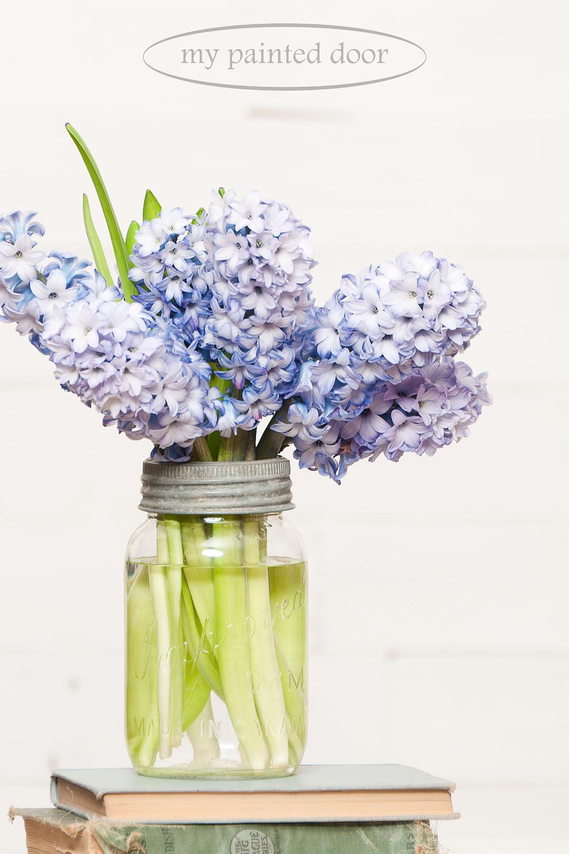 I love simplicity! Hyacinths in a mason jar.