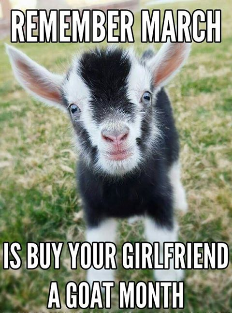 Buy your girlfriend a goat month - photo courtesy of Kirsten Spence from Hurkett Hill Farm