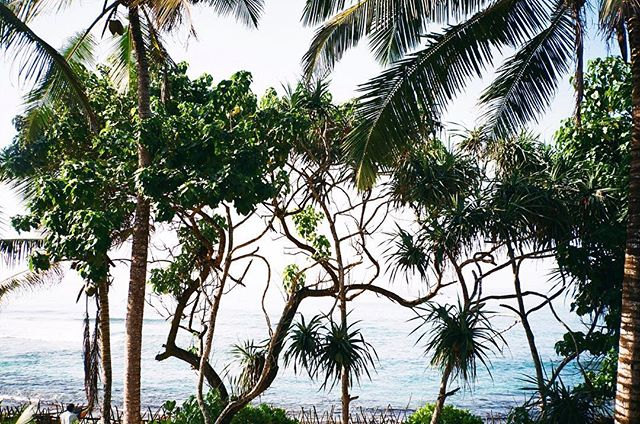 Mood 🌴  #kinsfolk #palmtrees #srilanka #summer #beach #moodoftheday