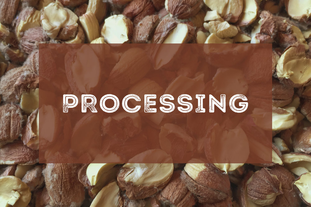 HTEAA - Processing.jpg