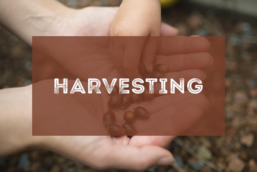 HTEAA - Harvesting.jpg