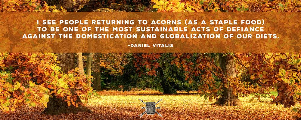 Acorn Quote-3.jpg