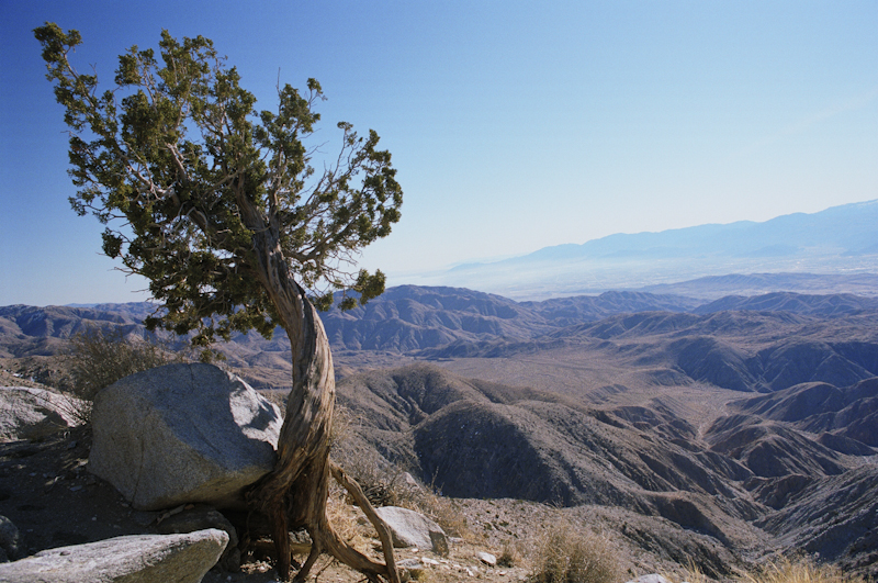 Joshua Tree National Park California, USA