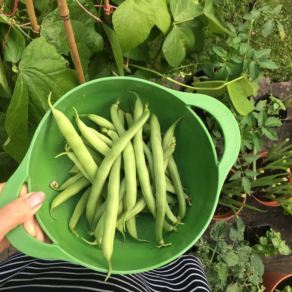 my beans