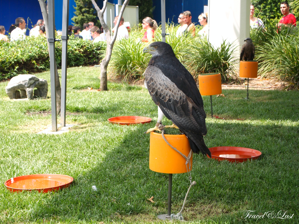 Different species of birds give a 'sky-high' show.