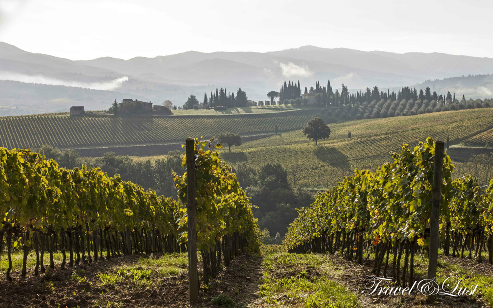 Beautiful vineyards and cypress trees serenade the Chianti countryside around the old stone family holiday home 'Casa Montrogoli' that Zero Tuscany Tours can rent to their guests. Click here to learn more about booking the villa http://www.montrogoli.it/en/.