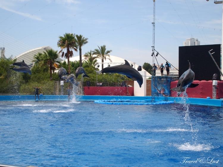 Watch a dolphin show in the Aquarium.
