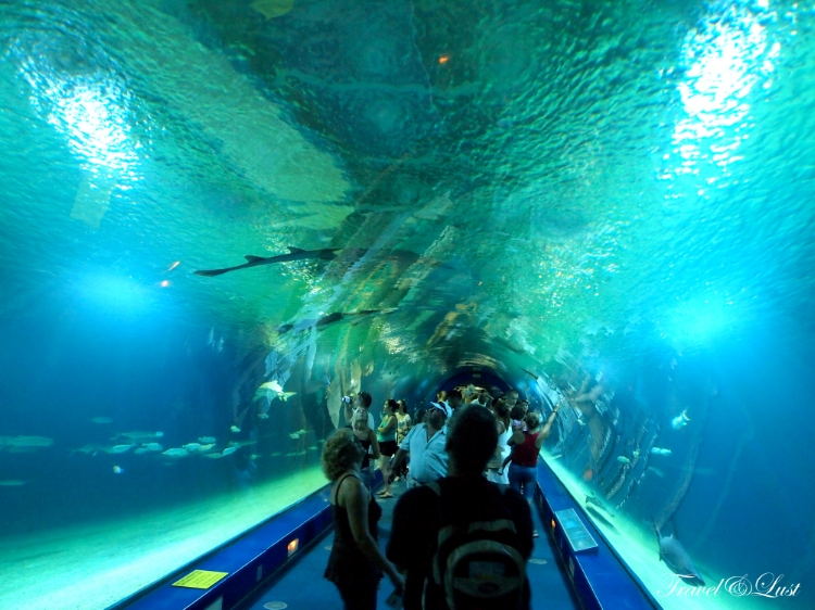 The all around overhead aquarium is one of the most visited attractions in Valencia.