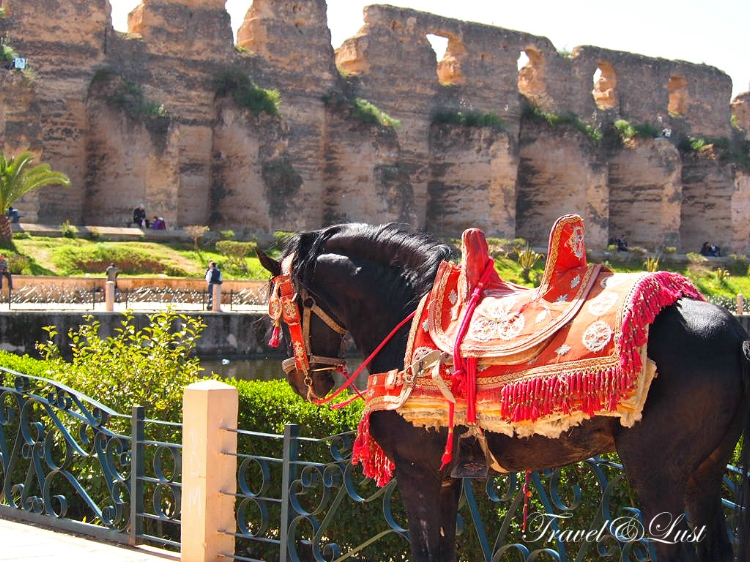 Arabic horse ready for pick up in Meknes. In this beautiful city, the Mausoleum of Moulay Ismail is the final resting place of one of Morocco's most notorious sultans. The architecture and craftsmanship is amazing, with gorgeous tiles, wood carvings and spectacular doors.