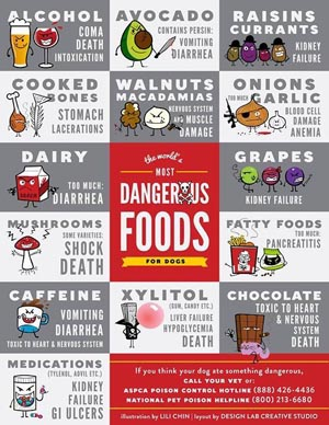 Canine Toxic Food Chart 300x388.jpg