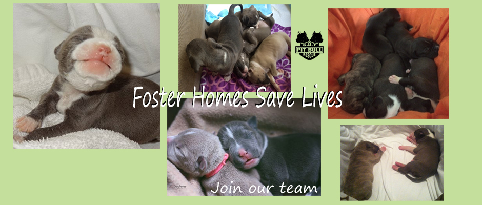 Foster Homes Save Lives