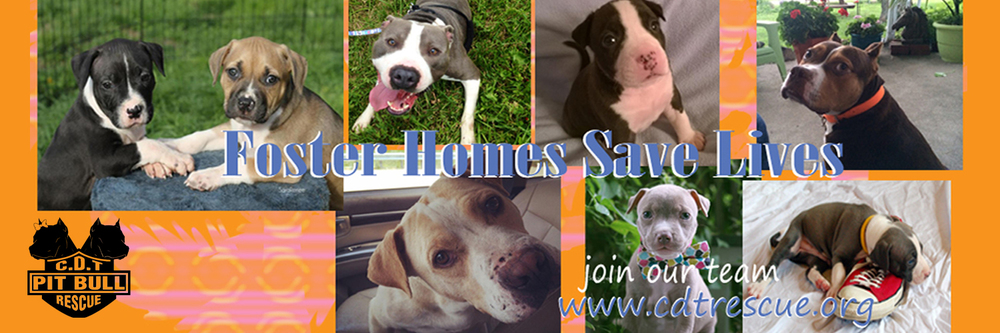 Foster homes save lives 2.jpg