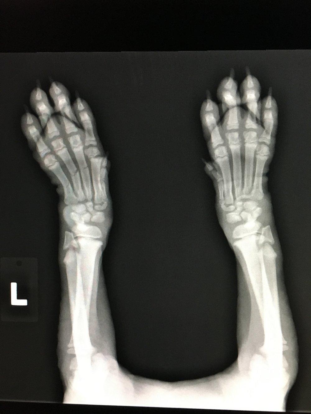 Ollie's x-ray