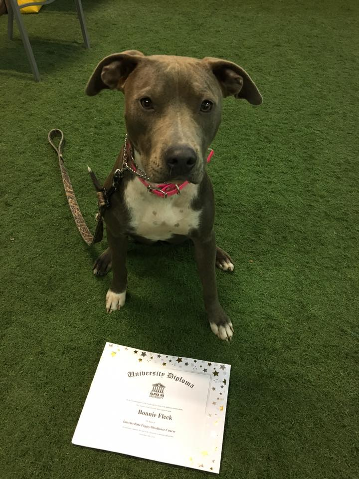 Bonnie graduated obedience 111916.jpg