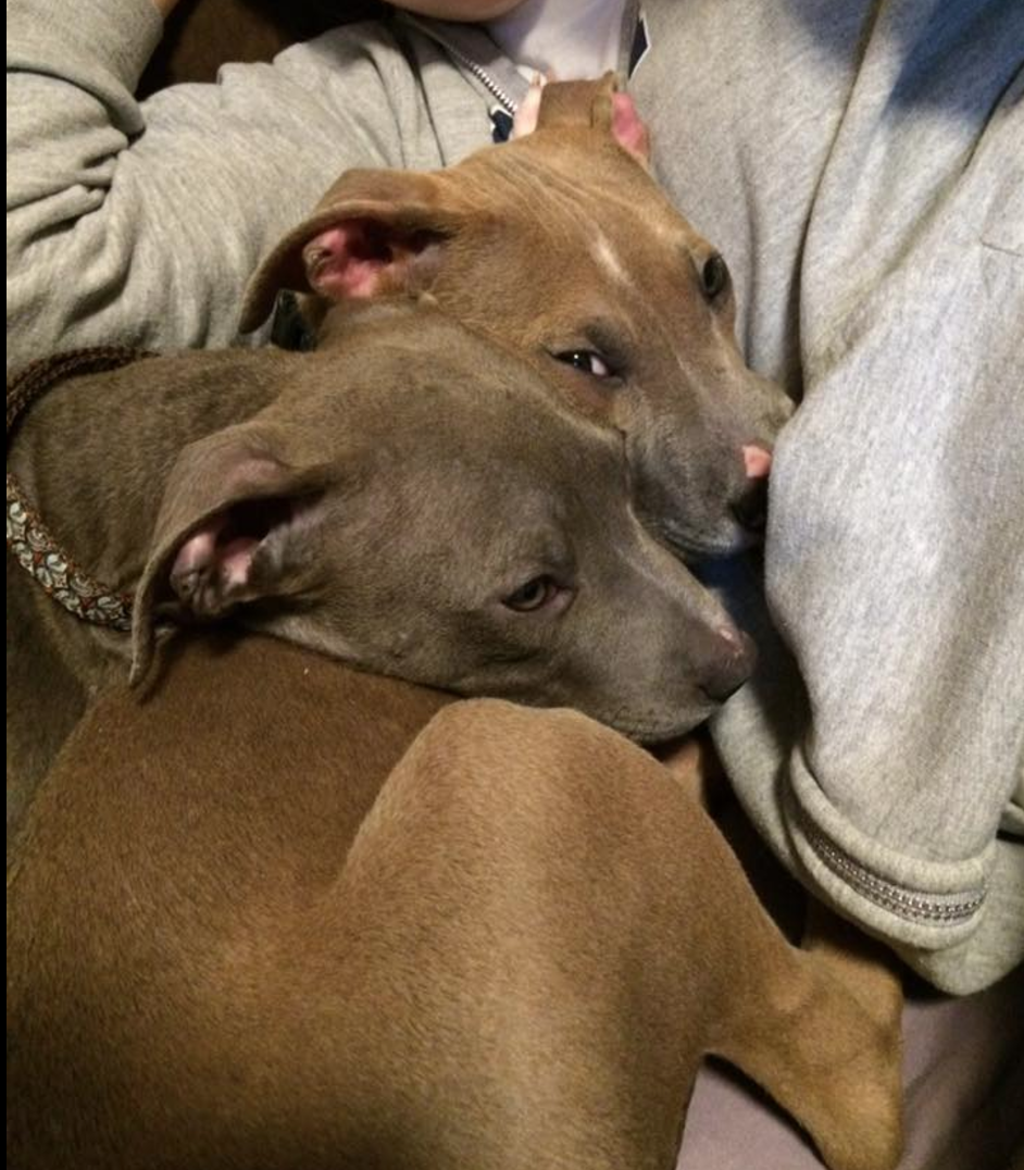 Bonnie and Clyde snuggle 050616.png