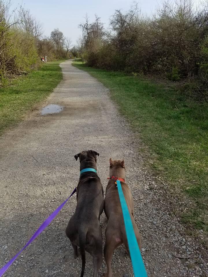 Jasmine and Meeko walking