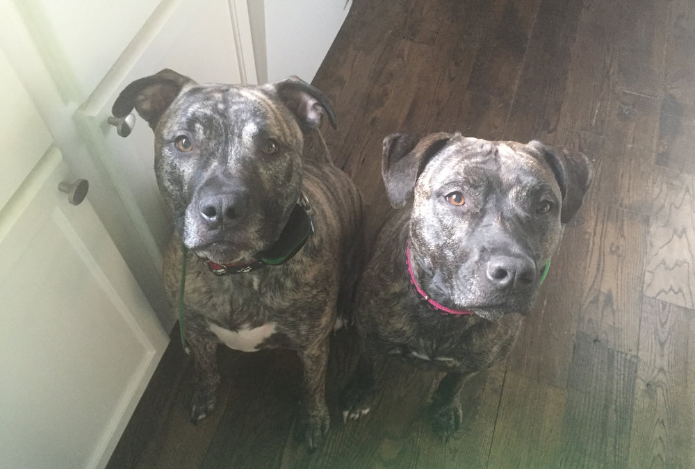Duke on left and Athena on right (1).jpg