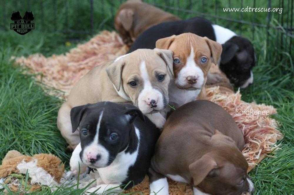 Bean pups class of 2014