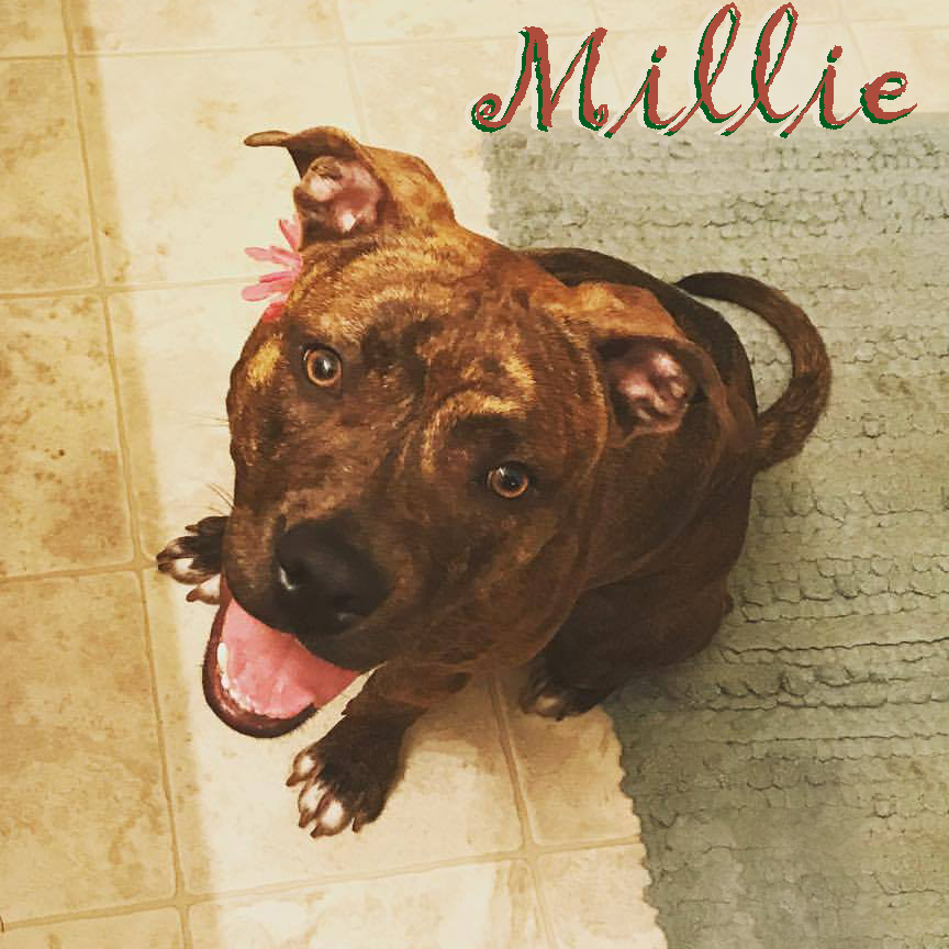 Millie with flower and name.jpg