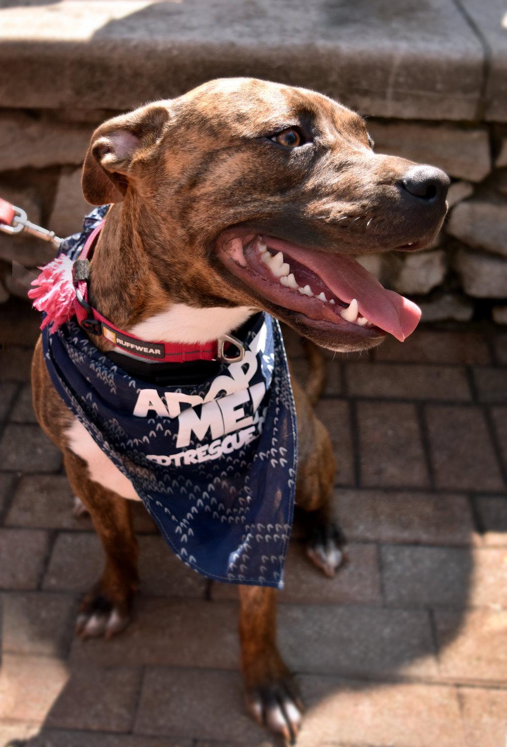 Millie at the Regatta 2.jpg