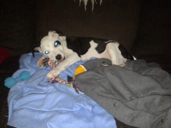 Angus playful pup.jpg