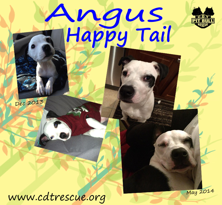 Angus update 050614.jpg
