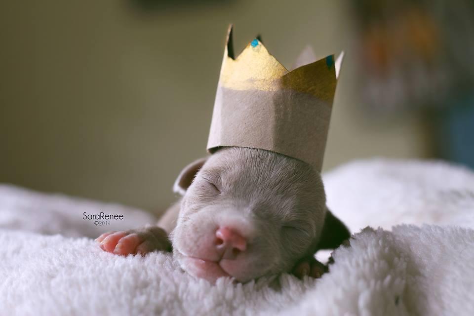 0812 princess.jpg