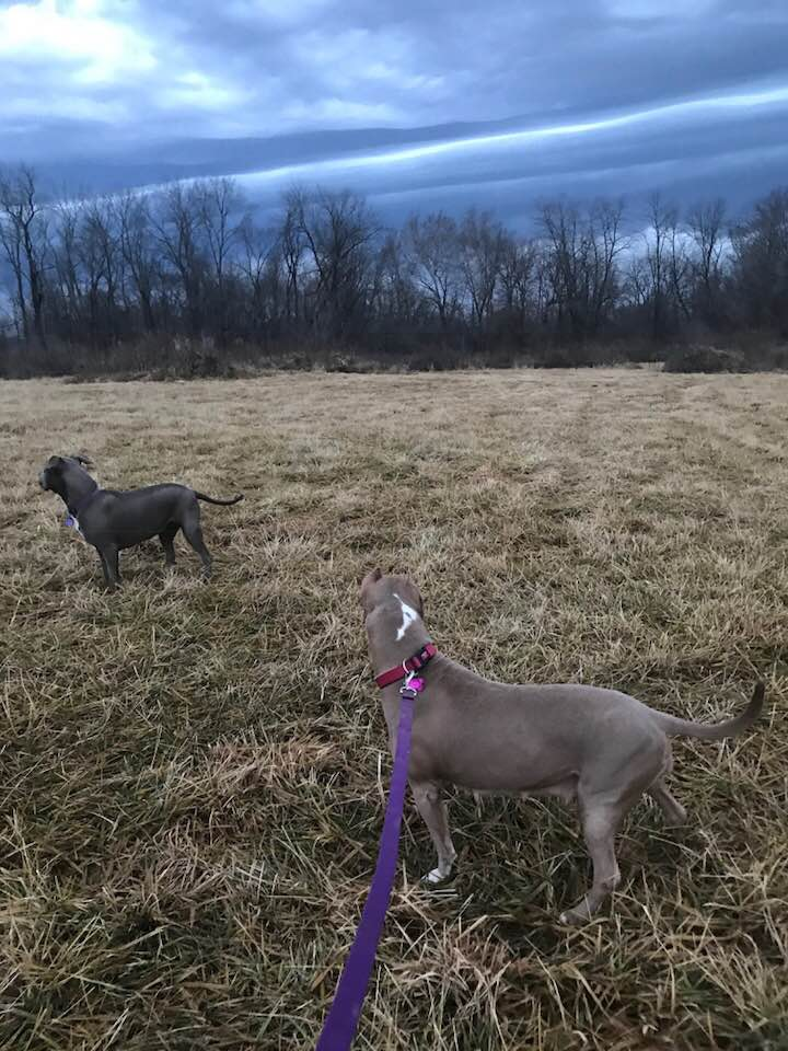 Out for a walk on the farm. What a dramatic sky!