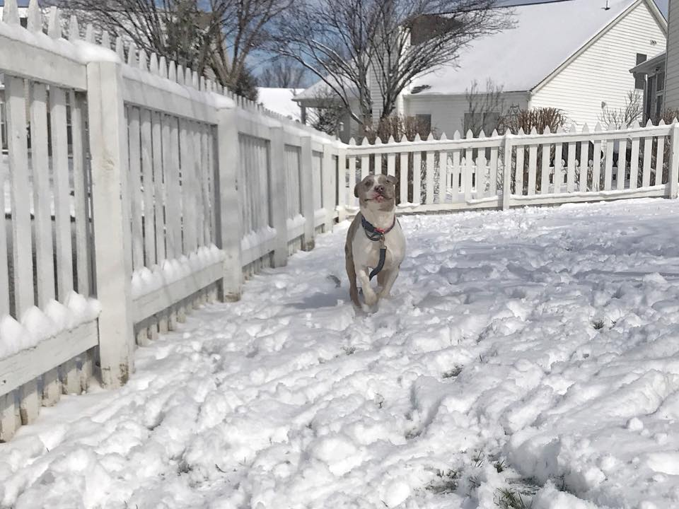 First snow frolic!