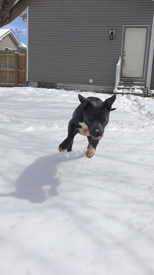 Fast dog!
