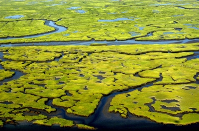 great marsh overhead.jpg