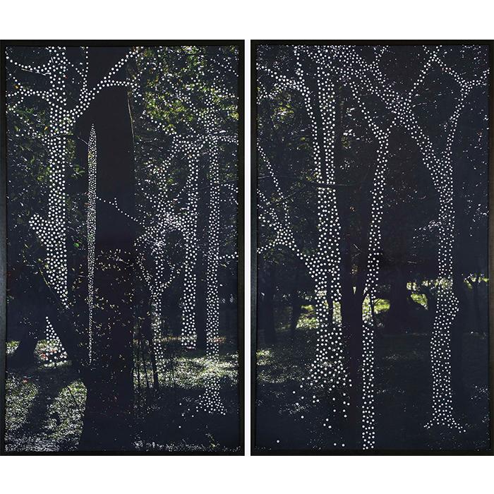 Albano Afonso Da série Florestas | Lisboa fevereiro de 2009 Fotografia perfurada sobre alumínio Edição 1/3 220 x 260 x 6 cm Díptico 220 x 130 x 6 cm cada