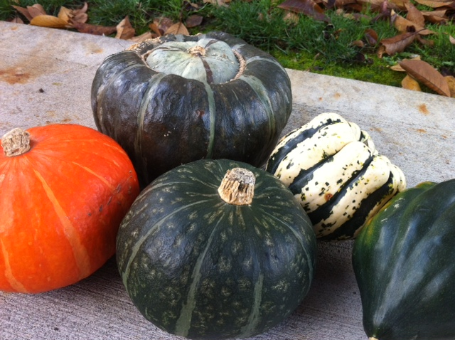 Winter Squash Nov 13.jpg