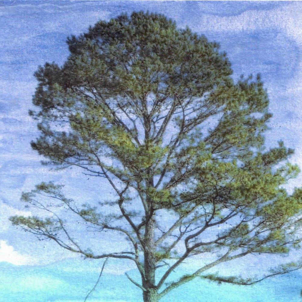peacetree.jpg