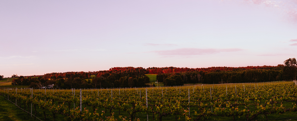Randall's Yard Vineyard, Margaret River
