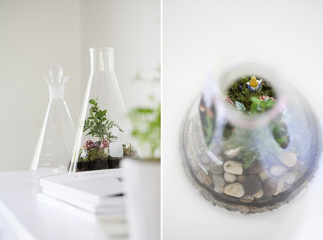 terrariums melbourne