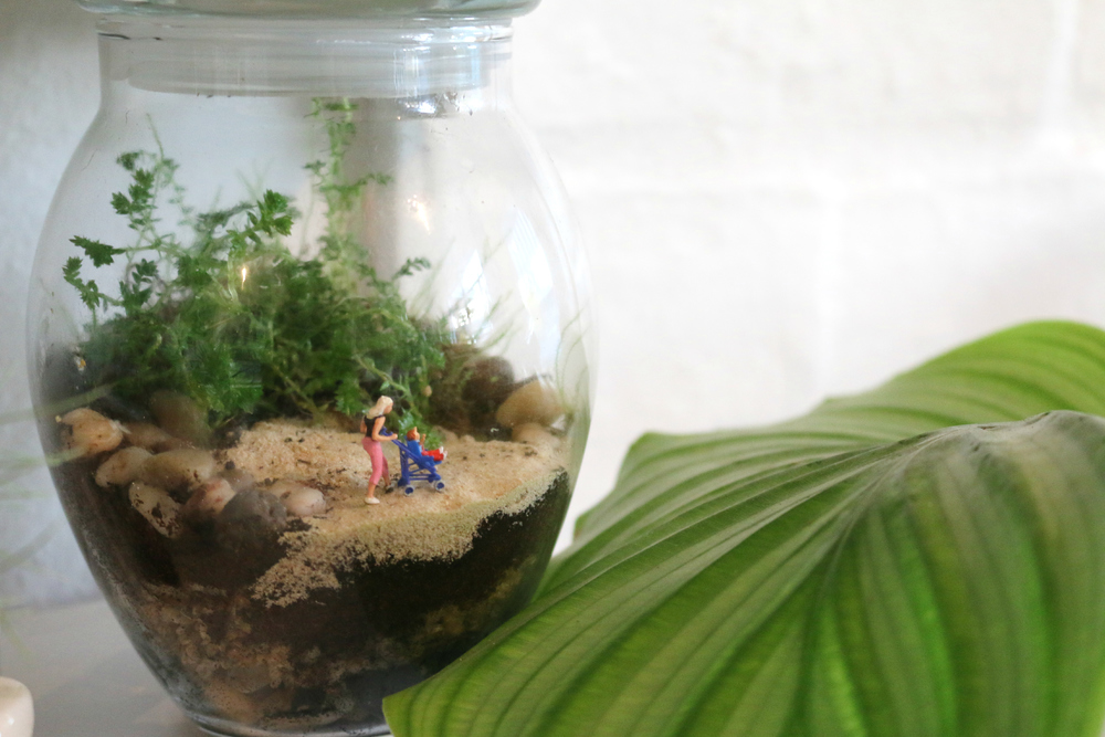 Terrariums Melbourne Little Landsblog Little Lands