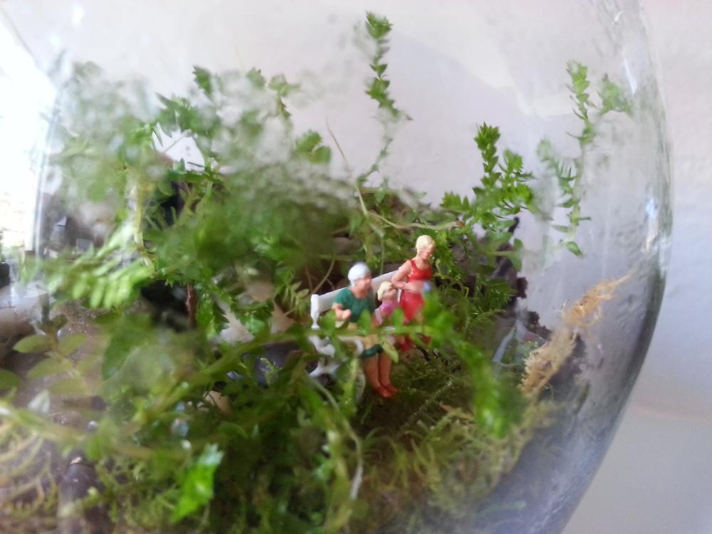 melbourne terrarium