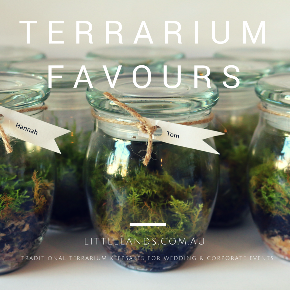 wedding favour terrarium