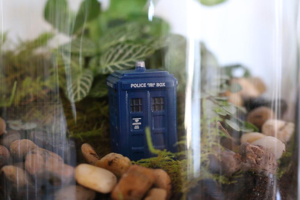 Dr Who Terrarium