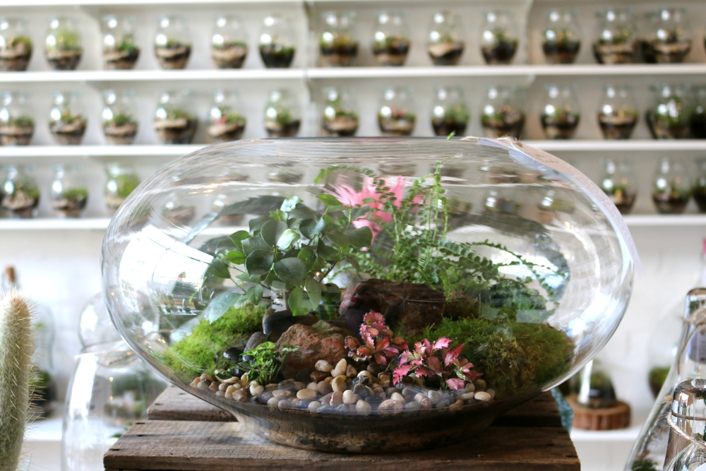 Melbourne terrariums