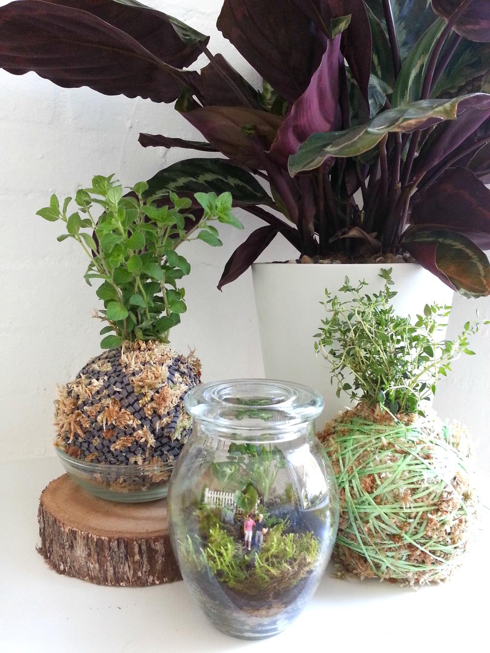 Honeypot Terrarium