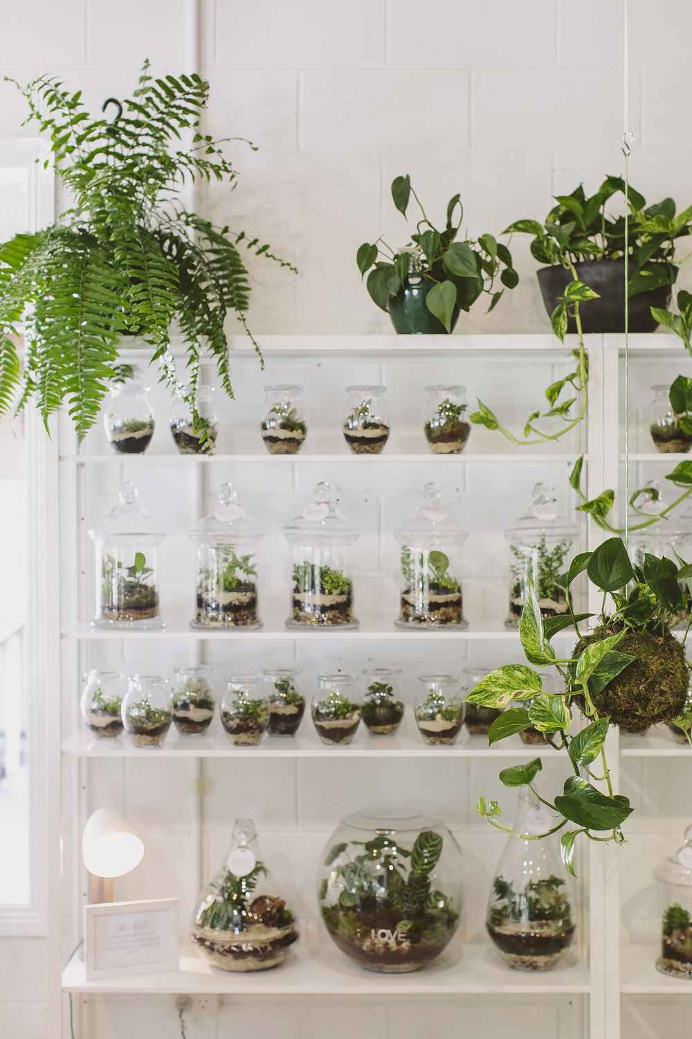 Terrariums Melbourne Little Landsshop Little Lands