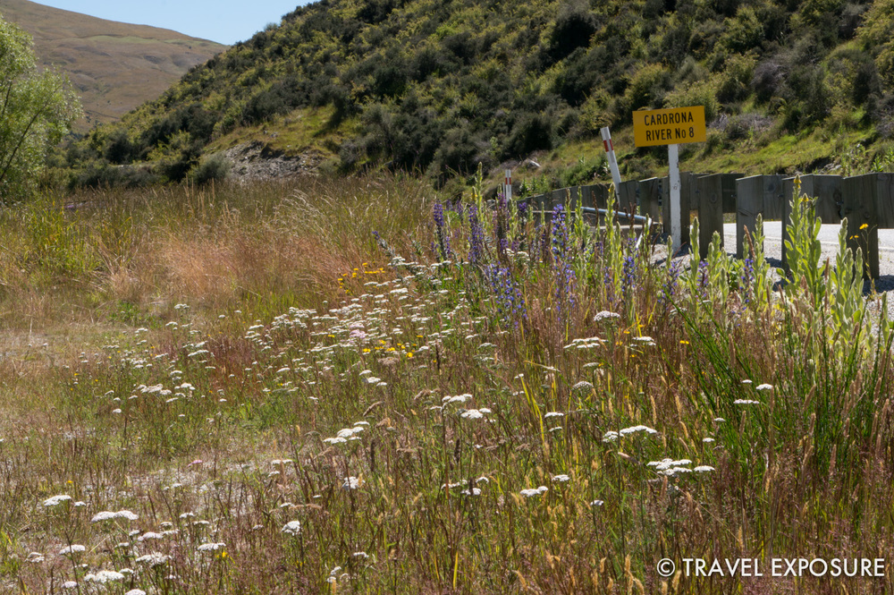 Wildflowers by the side of the road in Otago