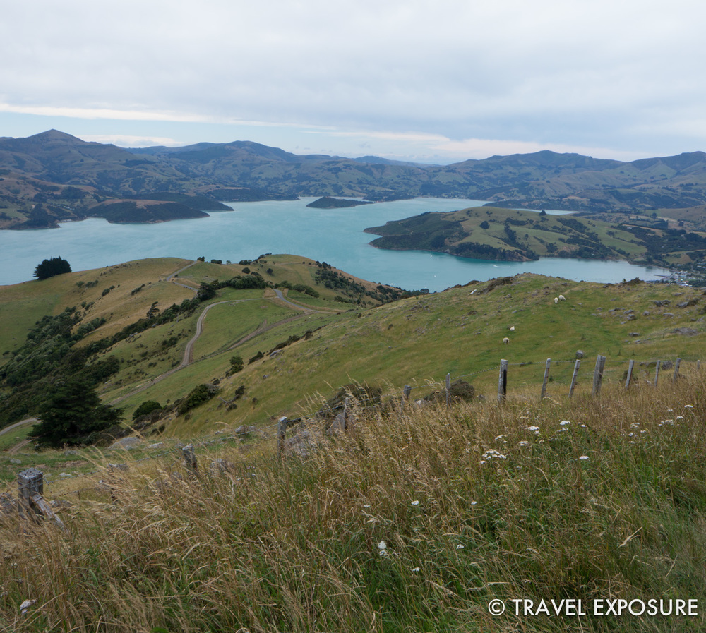 Overlooking sheep pastures toward Akaroa Harbor