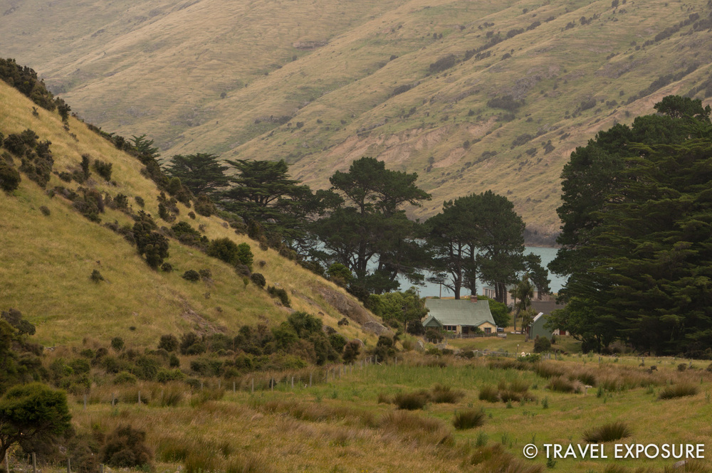 Bush walk in Banks Peninsula