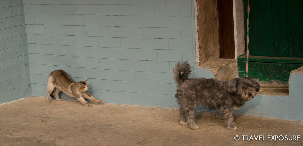 At our homestay in Kewzing - the family cat and dog
