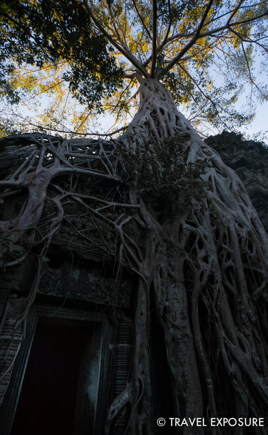 WEEK OF DECEMBER 8 Tangled roots of a tree grow over the Ta Prohm temple in Siem Reap, Cambodia.