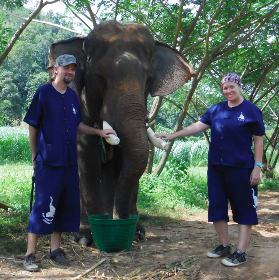 Taking care of an elephant in Chiang Mai, Thailand
